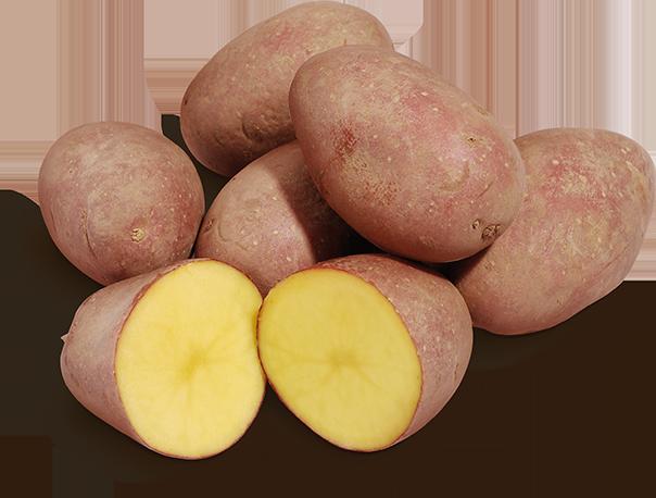 Fränkische Rotschalige Kartoffeln