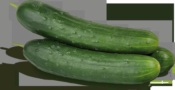 Spanische Landgurken