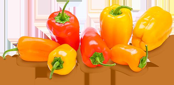Niederbayerische Bunte Mini-Paprika