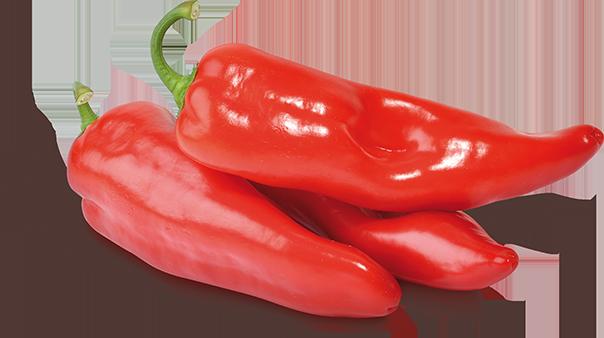 Spanische Spitzpaprika rot